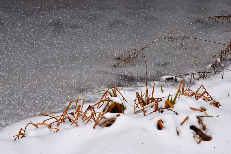 Frozen pond - Emmaus - 2012