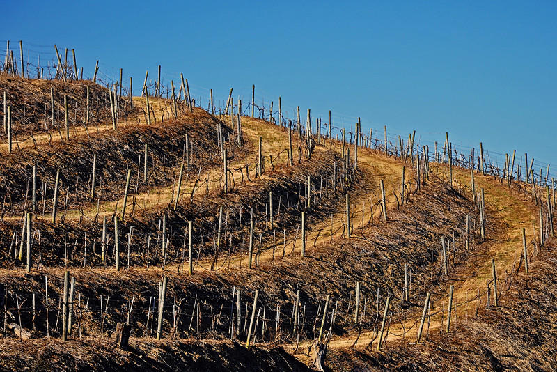 Blue Mountain Vineyard - New Tripoli, PA - 2012