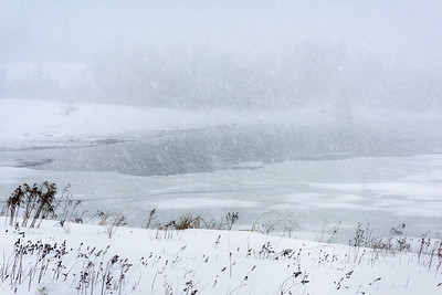 USA, Maine, Acadia National Park. Winter landscape during blizzard with heavy snow.