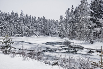 USA, Maine, winter landscape with snow, ice,water and snow-covered trees in Acadia National Park