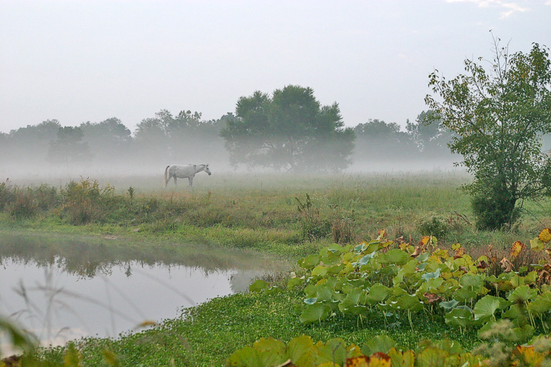 Taken with my Tamron 28-75 f/2.8 Lens.