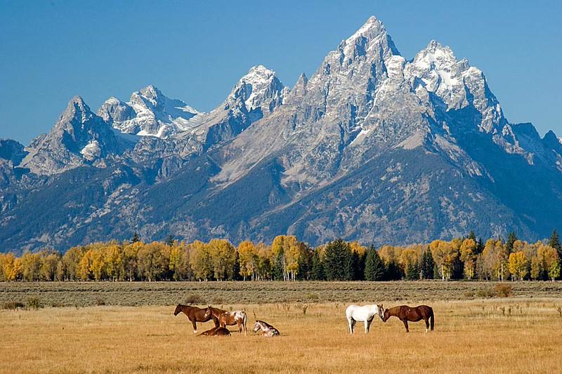 Horses and Grand Teton Mountains