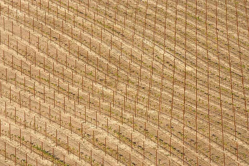Fallow Vineyard