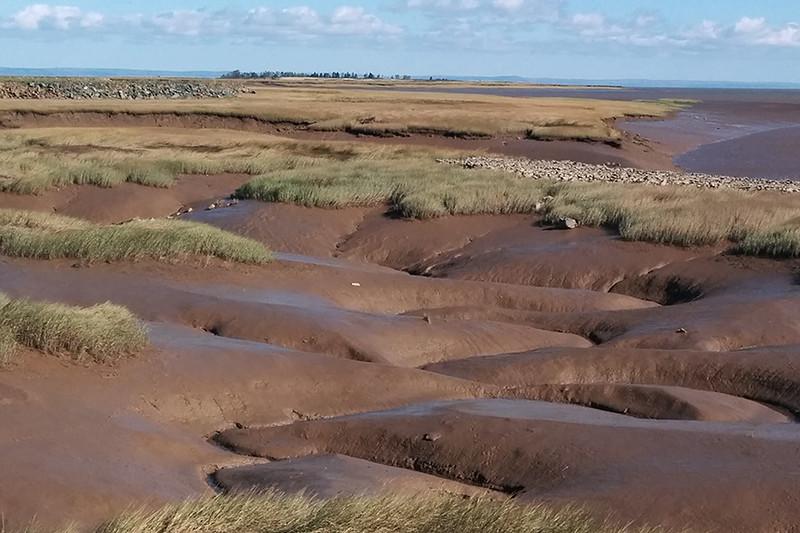 Fundy mud