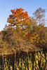 Fall colors-190119