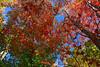 Fall scene-0111