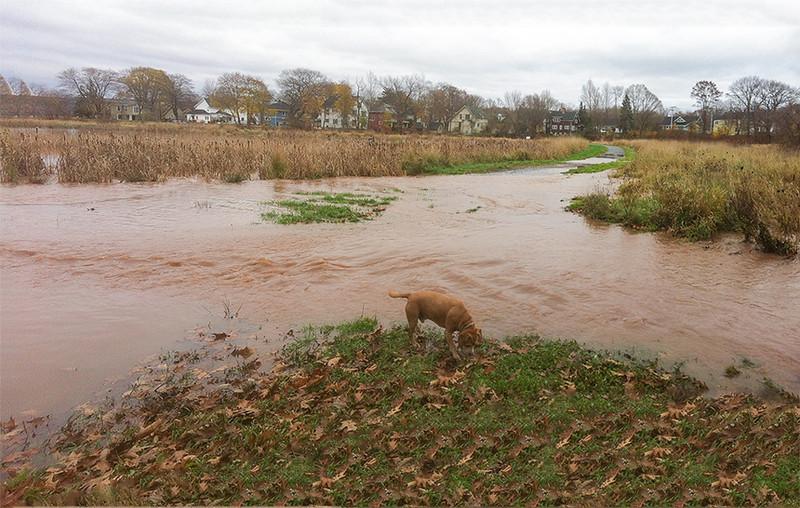 Miner's Flood