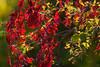 Leaves-3856