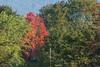 trees-2657
