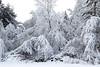Snow on trees-1000644