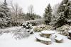 Winter backyard-1000466