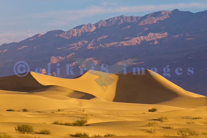 The famed Stovepipe Wells Sand Dunes. This is an early morning capture. I wanted to get closer but didn't want to chance an encounter with a sidewinder.