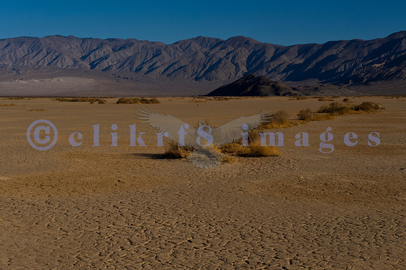 On California State Highway 190 which disects Death Valley, you pass through Panamint Valley heading East from Lone Pine. This was still early morning and it was HOT. The view is looking West toward the Panamint Mountains across parched desert.