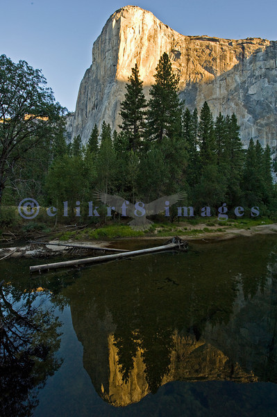 Ah, Yosemite. I am so glad that John Muir and others prevailed and made this area one of the nation's earliest national parks. The sad part is that it attracts people worldwide who love it to death. This is an early morning view from El Capitan Bridge in Yosemite Valley of El Capitan reflected in the still waters of the Merced River.
