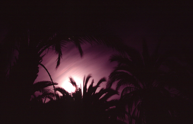 Full Moon Through Palms, San Ignacio<br /> (Baja Mexico, 2005)
