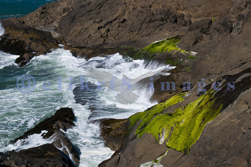 While my husband was photographing whales off a bluff high above the Pacific Ocean, I found a perch above the crashing surf. There is something about pounding waves against a craggy rocky shore that is mesmerizing.