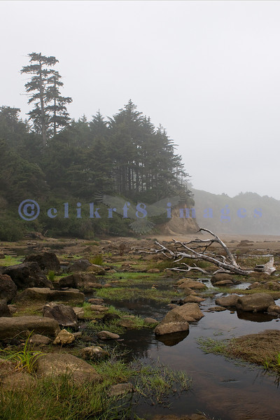 Fogarty Creek State Park was my favorite place to photograph on the Central Oregon Coast: sparse crowds, a sandy beach, crashing waves, rock formations, randomly strewn boulders, and a great place for agates, my husband and I spent three of seven days here. This particular day was foggy which added a faux sepia tone to the images.