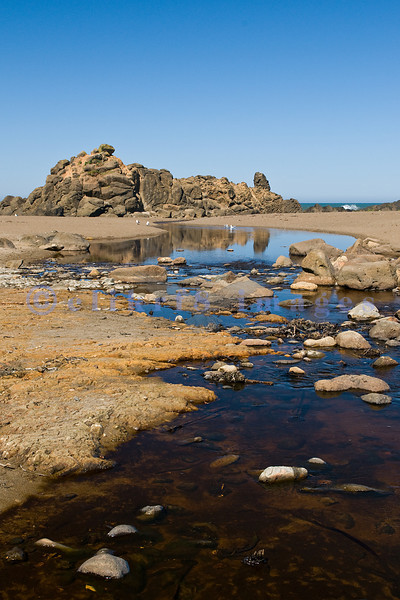 Fogarty Creek State Park was my favorite place to photograph on the Central Oregon Coast: sparse crowds, a sandy beach, crashing waves, rock formations, randomly strewn boulders, and a great place for agates, my husband and I spent three of seven days here. Blue skies on this sunny day here was reflected in the shallow creek as it wound its way to the the Pacific Coast.