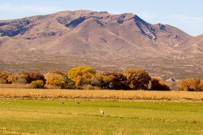 Mountain Scene - Bosque Del Apache NWR - NM