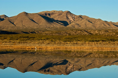 Mountains - Reflected - Bosque Del Apache NWR - NM