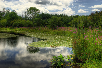 Great Brook State Park, Carlisle, MA (1)