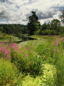 Great Brook State Park, Carlisle, MA (2)