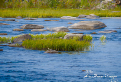 River Grasses
