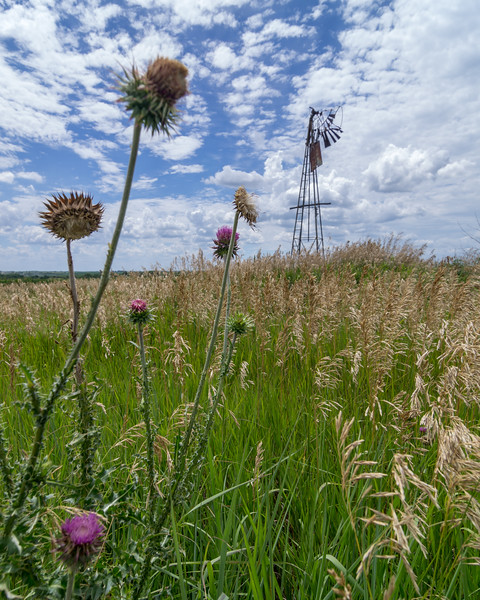 "Here is my attempt at juxtaposing the wilted thistle with the ""wilted"" windmill which is located along the route between Auburn and Nebraska City in southeast Nebraska.  Thanks for viewing."