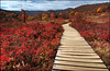Graveyard Fields boardwalk