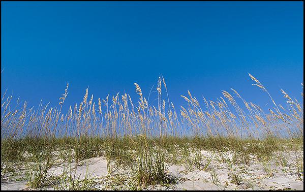 Sea oats at St. George Island