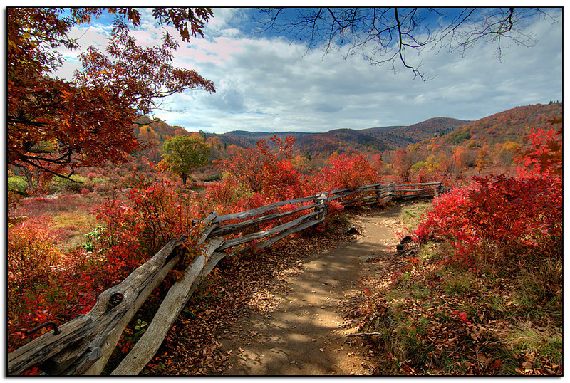 Graveyard Fields hiking trail