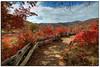 Graveyard Fields hiking trail