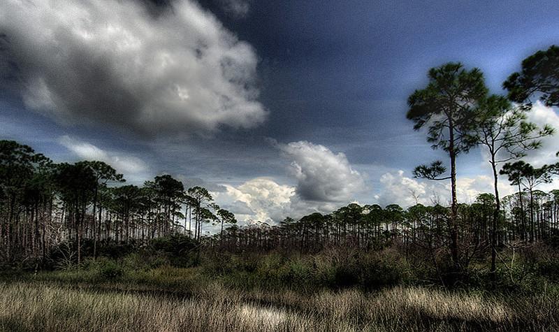 Trees at Hagan's Cove (manipulated photo, obviously)