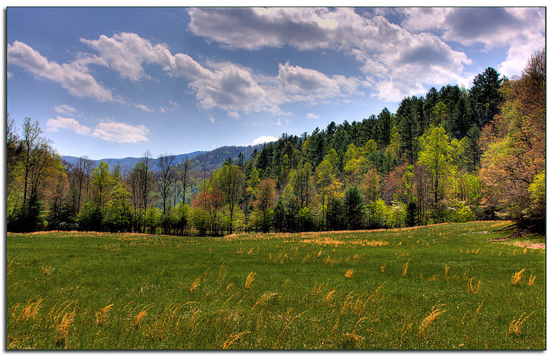 Cataloochee Valley in NC, where elk were released.