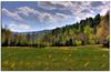 Cataloochee Valley in NC, where elk were released.