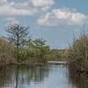 Eye-Level Sawgrass View