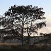 Tree at Sunrise