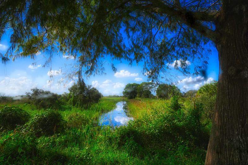 Loxahatchee Landscape