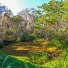 <b>Title - Pond Behind Visitor Center</b> <i>- Michael Stebel</i>