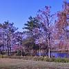 Cypress Treeline