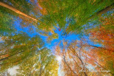 Kaleidoscope of Tall Trees