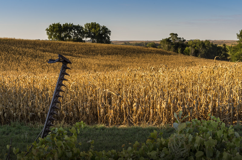 Scene from the Loess Hills of western Iowa.