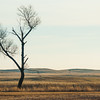 "This is another photo taken in the sandhills north of Burwell, NE, during a deer hunting trip in 2009.   A quote from US Novelist Willa Cather (1873-1947), from her book ""My Antonia"" seems fitting:  ""Trees were so rare in that country, and they had to make such a hard fight to grow, that we used to feel anxious about them, and visit them as if they were persons.  It must have been the scarcity of detail in that tawny landscape that made detail so precious."""