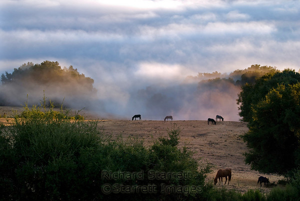 Horse pasture morning
