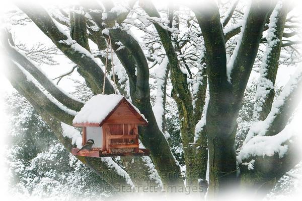 Donna's bird feeder in the snow