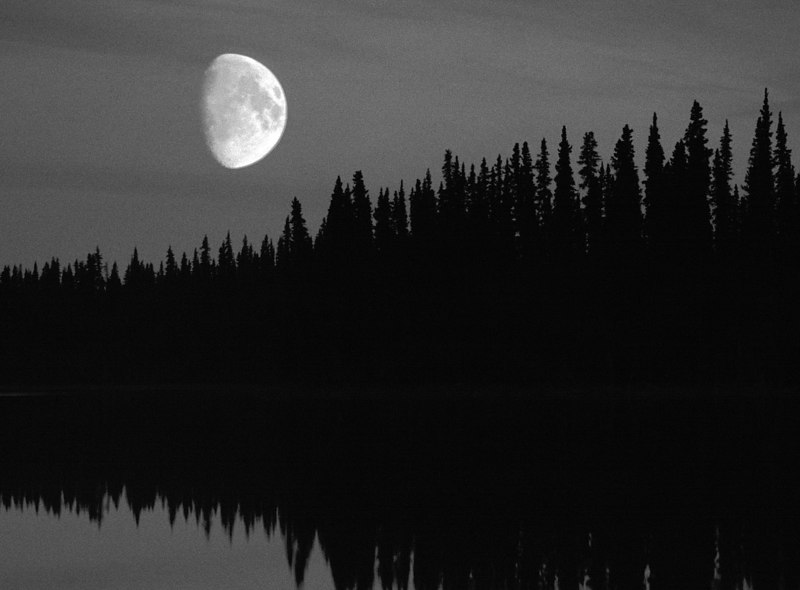 Moon Over Pines,  Alaska Highway<br /> (Canada, 2004)