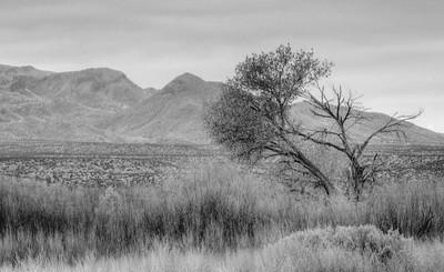 Bosque Del Apache National Refuge, New Mexico