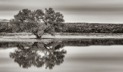 Tree reflection, Bosque Del Apache National Refuge, New Mexico