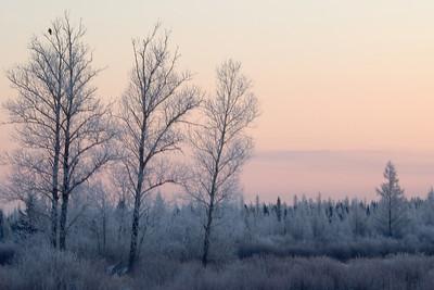 Frosty Sunrise - Sax Zim Bog - St. Louis County, MN