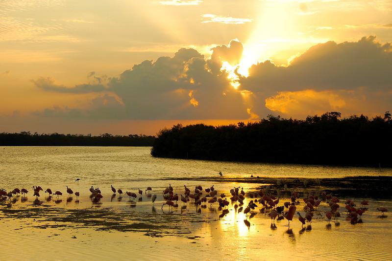Roseate Sunset 20110505-DSC_0593 - Lu